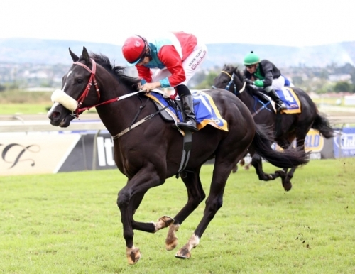 Bloodstock South Africa Racehorse Sale