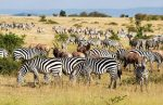 Serengeti Park Wildlife