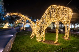 Joburg Zoo Festival of lights and night market: A treat for all ages